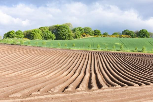 Brytyjskie rolnictwo na skraju upadku?