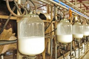 Włochy mają problemy ze spłatą kar za nadprodukcję mleka