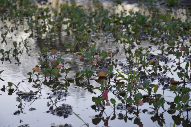 Podtopienia – efekt wieloletnich zaniedbań w melioracji