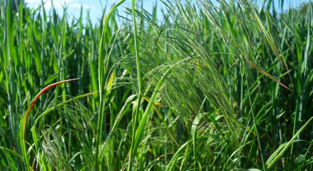 Ochrona roślin przy zmniejszonej ilości śor