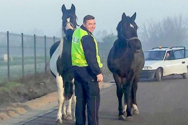 Konie blokowały ruch na drogach i torach