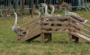 Niemcy: Lęk przed ptasią grypą