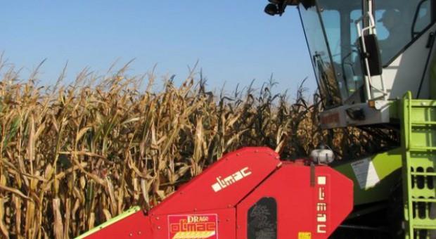 Zbiory kukurydzy na Podkarpaciu bardzo zaawansowane