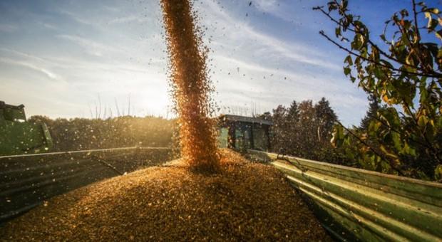 Rosja: Początek skupu interwencyjnego zbóż w 2018 r.