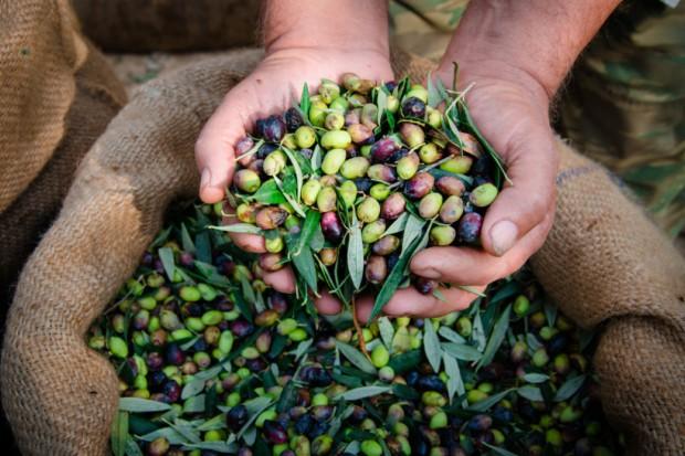 Włochy: Z powodu anomalii pogodowych czarny rok dla wina, oliwy, jabłek i miodu