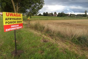 Warmińsko-mazurskie: ASF w gospodarstwie z prawie 1400 świniami