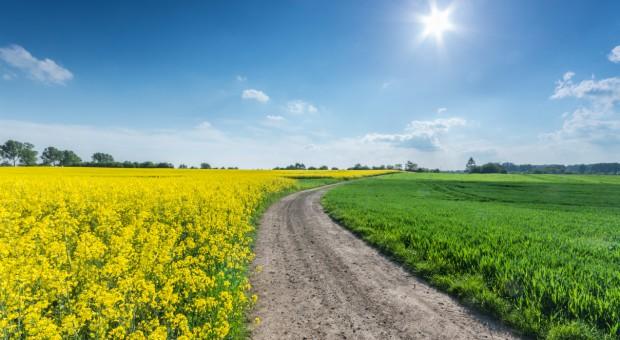 Ministerstwo Rolnictwa: Trwają konsultacje ws. zmian w ustawach regulujących obrót ziemią