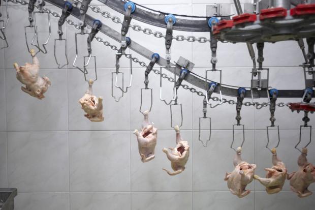 Wietnam chce eksportować mięso kurcząt do UE