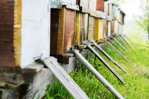 49-latek ukradł 10 uli - część pszczół nie przetrwała