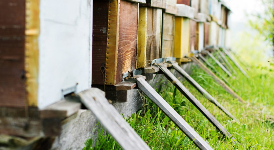 Bartosik: Do pszczelarstwa w latach 2015-2021 trafiło 190 mln zł