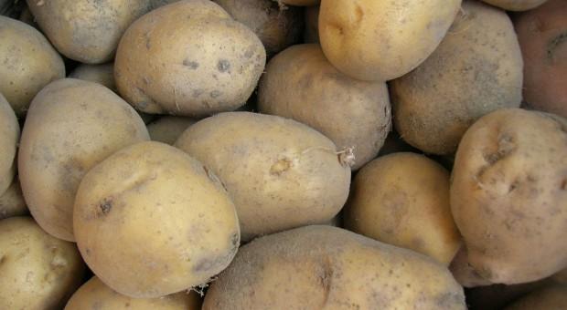 Więcej ziemniaków w Europie Zachodniej