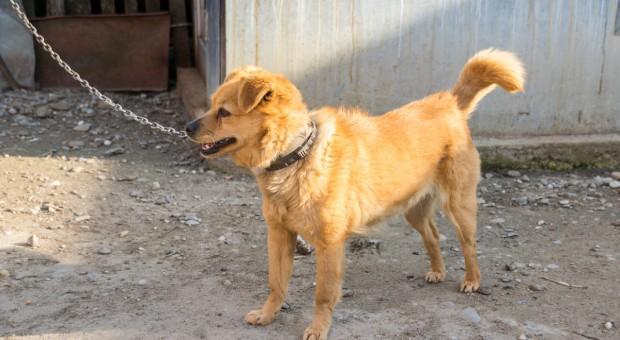 Projekt: Nie będzie można trzymać psa na uwięzi czy hodować zwierząt na futra