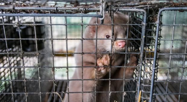 Posłowie o zmianach przepisów o ochronie zwierząt