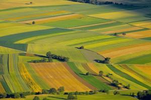 Bez zmian w strukturze gospodarstw polskie rolnictwo nie będzie konkurencyjne w UE