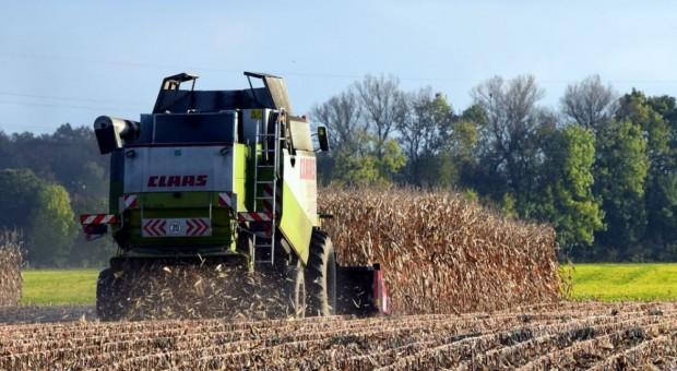 Ukraina: Mniejsza prognoza zbiorów kukurydzy