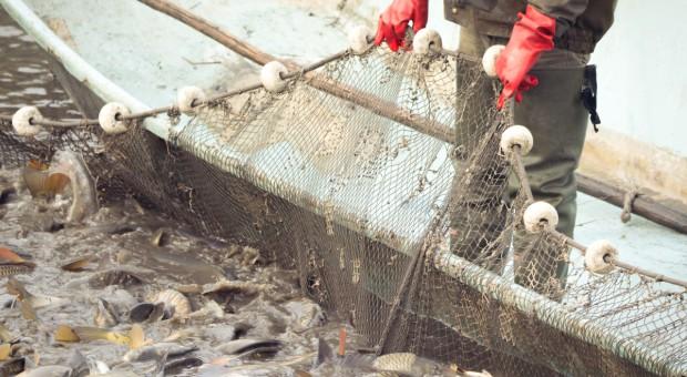 MRiRW: zalecenia ws. sprzedaży żywych ryb nie powinny być zmienione