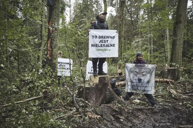 Wina, ale bez kary za blokowanie wycinki w Puszczy Białowieskiej
