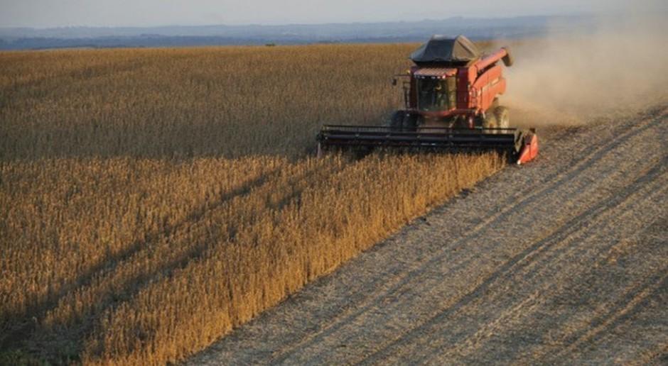 IGC: Prognoza światowej produkcji soi w sezonie 2017/2018 prawie bez zmian