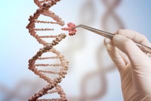 Naukowcy gromadzą wolne od błędów genomy zwierząt - na razie 16, wkrótce kolejne 70 000