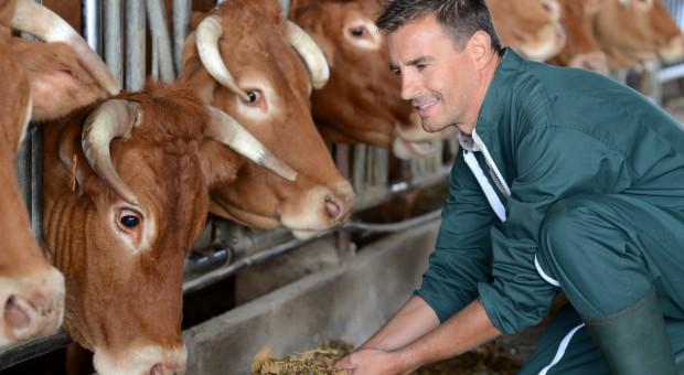 Holandia: Plany inwestycyjne producentów mleka