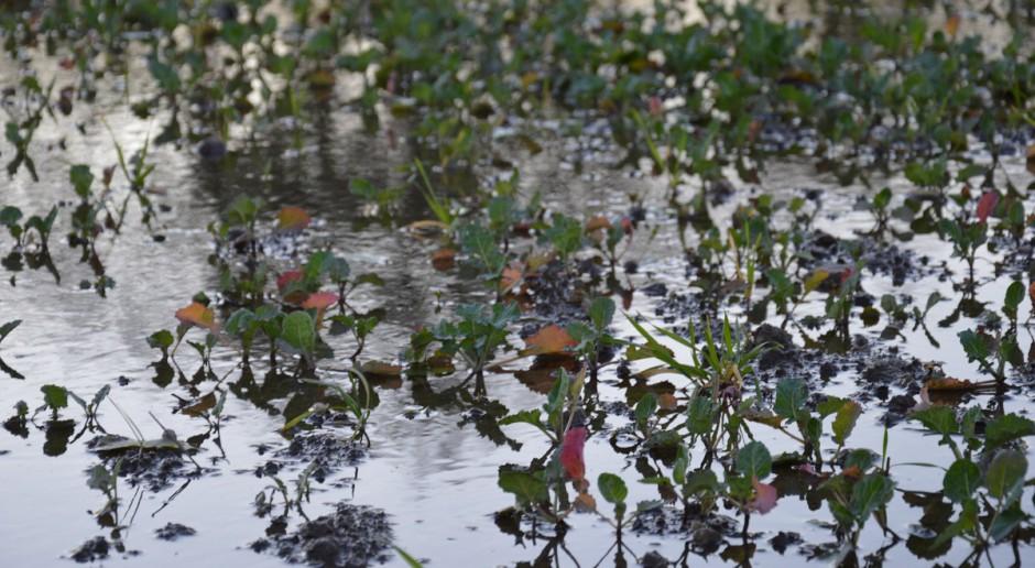 KE: Pogoda nie rozpieszcza rolników