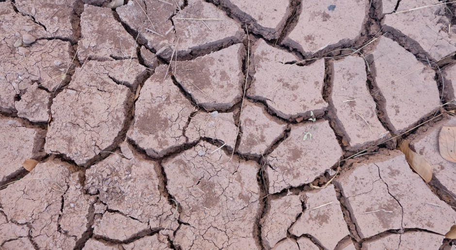 Naukowcy szukają sposobów na suszę. Pracują nad modyfikacją nasion