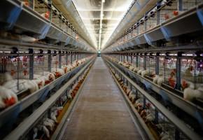 Pół miliona dolarów z Doliny Krzemowej dla polskich obrońców zwierząt