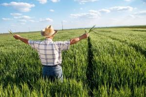 Cena ziemi a Wspólna Polityka Rolna