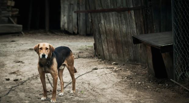 Czabański: Ustawa o ochronie zwierząt ma ukrócić patologię w systemie opieki nad zwierzętami