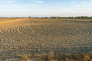 Tegoroczna susza zmieniła hiszpańskie rolnictwo