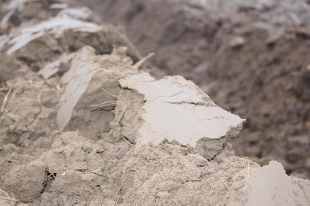 Dziś obchodzimy Światowy Dzień Gleby