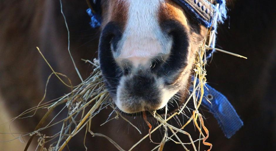 W Niemczech zaczęło działać pierwsze w kraju krematorium dla koni