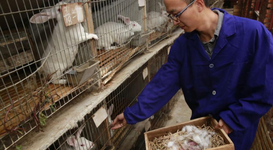 Chiny światowym liderem branży futrzarskiej