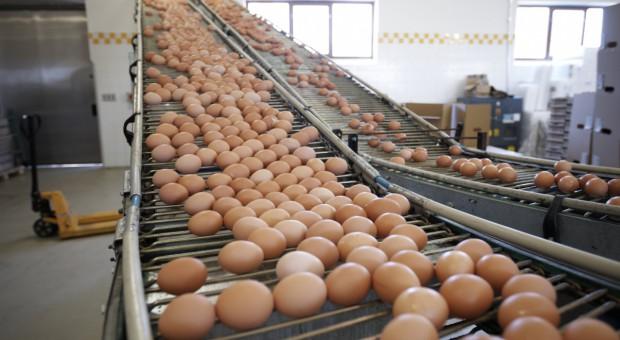Drobiarze: Nowy program zwalczania salmonelli może spowodować wzrost cen jaj