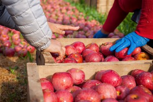 Sejm za tym, by lepiej kontrolować sprzedawane owoce i warzywa w Polsce