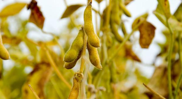 Uprawa soi jest możliwa w całej Polsce?