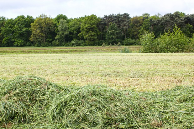 Nowe odmiany traw na TUZ