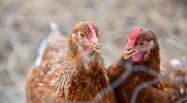 Raport: Niepokojący wzrost liczby przypadków zakażenia salmonellą