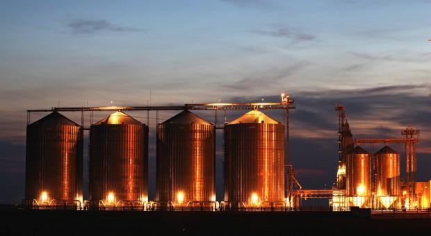Giełdy zbożowe: Ceny zbóż spadają