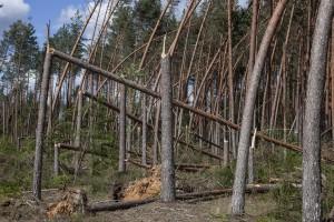 Halny powalił w Beskidach drzewa o kubaturze ponad 70 tys. m sześc.