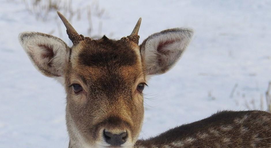 Podlaskie: Będzie apelacja za okrucieństwo wobec dzikich zwierząt