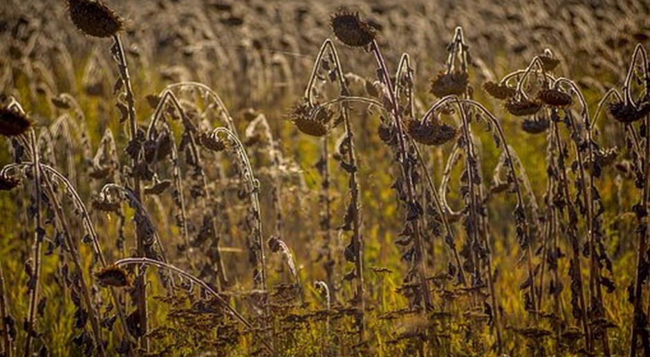 Ukraina: Grunty rolne nadal objęte moratorium