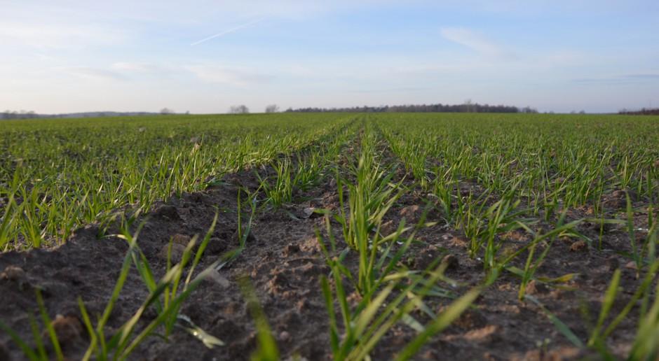 Produkcja roślinna bez błędów w uprawie