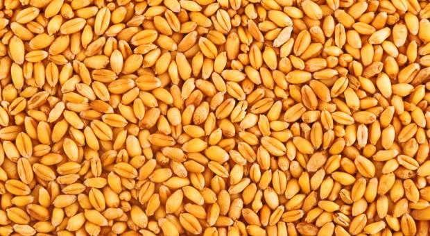 Zidentyfikowano część nasion z tajemniczych przesyłek z Chin
