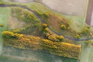 Polska ma być liderem  w zakresie rozwiązań prośrodowiskowych