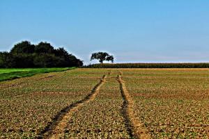 Ukraina: Degradacja gleby kosztuje 600 mln euro rocznie