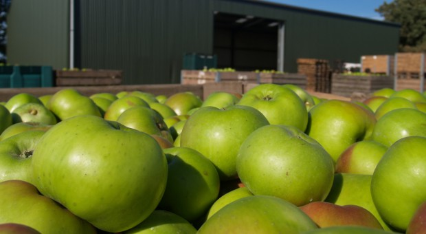 Od dziś Rosja zakazuje importu jabłek z 31 białoruskich firm