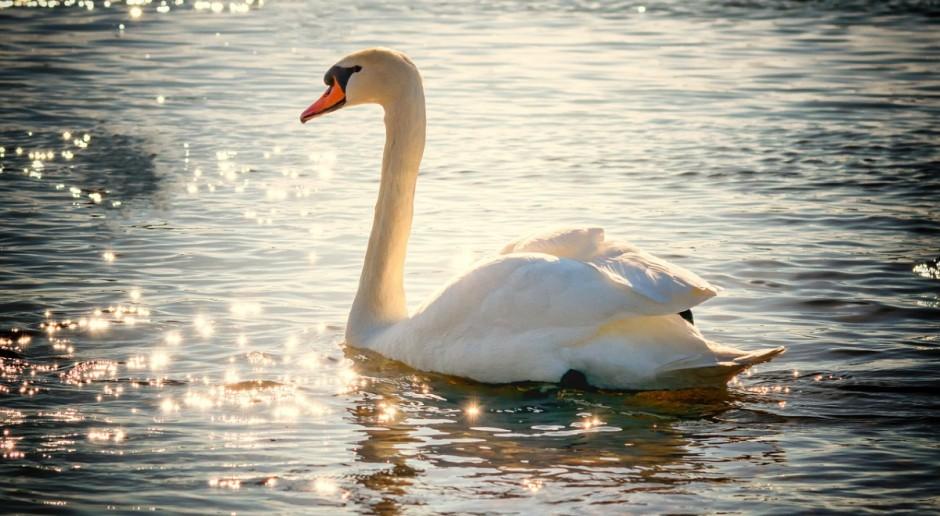 Przypadek ptasiej grypy w Szwajcarii