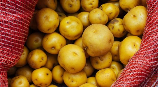 Złoty ziemniak... przyszłością świata