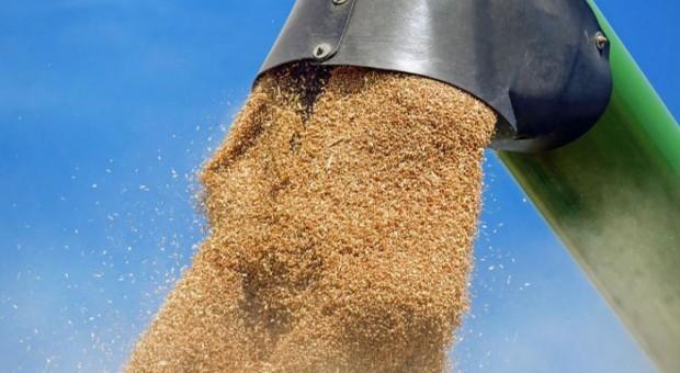 GUS: Zbiory zbóż w sezonie 2016/2017 ocenione na 32,2 mln t